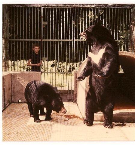 ours lippu des Indes