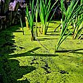 Mare gauloise au parc gaulois à Saint Julien sur Garonne hdr 800x600