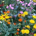 2008 09 30 Un mélange de fleurs pour abeilles