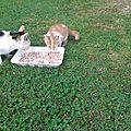 <b>Chatons</b> jumeaux <b>roux</b> et <b>chaton</b> blanc et <b>roux</b>