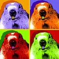 Marmotte psychédélique ! - 3 décembre