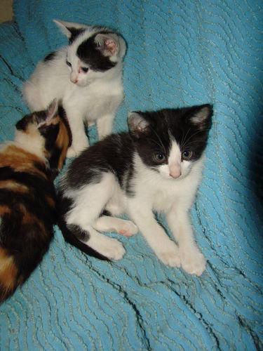 2008 05 09 Deux chatons de Blanco