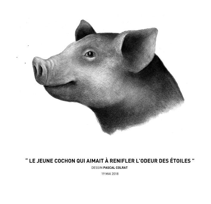 __le_jeune_cochon_qui_aimait_a__renifler_l_odeur_des_e_toiles__