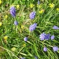 Fleurs de printemps chez moi