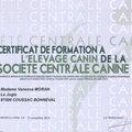 Mes compétences: éthologie - zoothérapie - <b>naturopathie</b> - certificat de capacité d'élevage canin