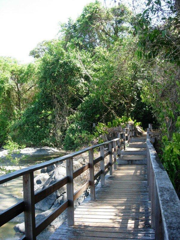 Mangrove Montabo