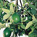 Le fruit m