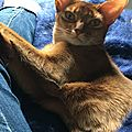 Abyssins d