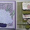 Reprise des ateliers avec des cartes succulentes