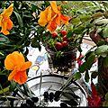 fleurs jardin décembre