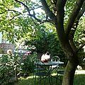 Charmant T2 avec jardin