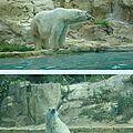 Un p'tit tour au zoo d'amnéville