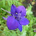 ♥ Petit coucou et découverte de la <b>Dauphinelle</b> au jardin du Bonheur - Edit ♥