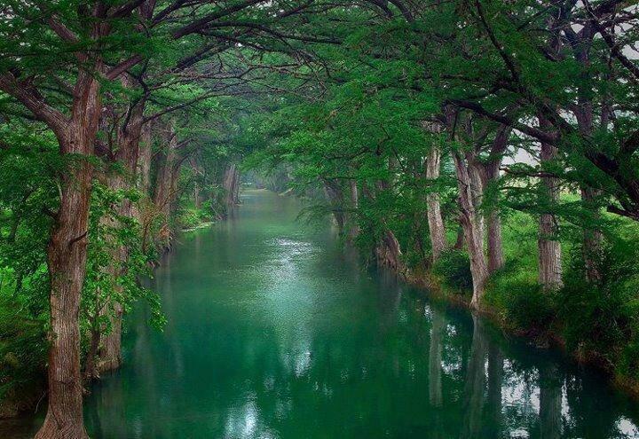 riviere arbre7_1585684989_n
