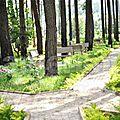 Ngaoundéré: le bois de mardok est ouvert