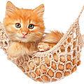 5 <b>idées</b> <b>fausses</b> sur les chats