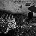 chat pluie animaux politique