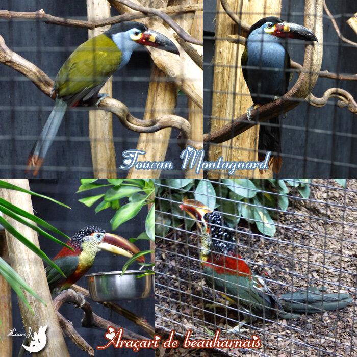 Parc des oiseaux 1