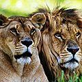 ARRÊTONS LE MASSACRE DES LIONS DE L'AFRIQUE DU SUD AVEC AVAAZ.ORG