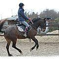 Quelles assurances si je prends un cheval en demi-pension ?