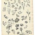 Recherches botaniques