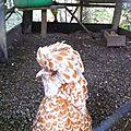 Parc animalier de Sare, Bernadette Padoue (64)