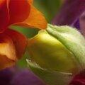 le baiser des fleurs ©Nicole Laillet