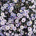 Bouquet du <b>week</b> <b>end</b> # 284 - sem 46