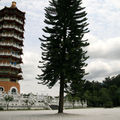 Tseng pagodia