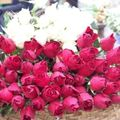 Roses au marché au fleur