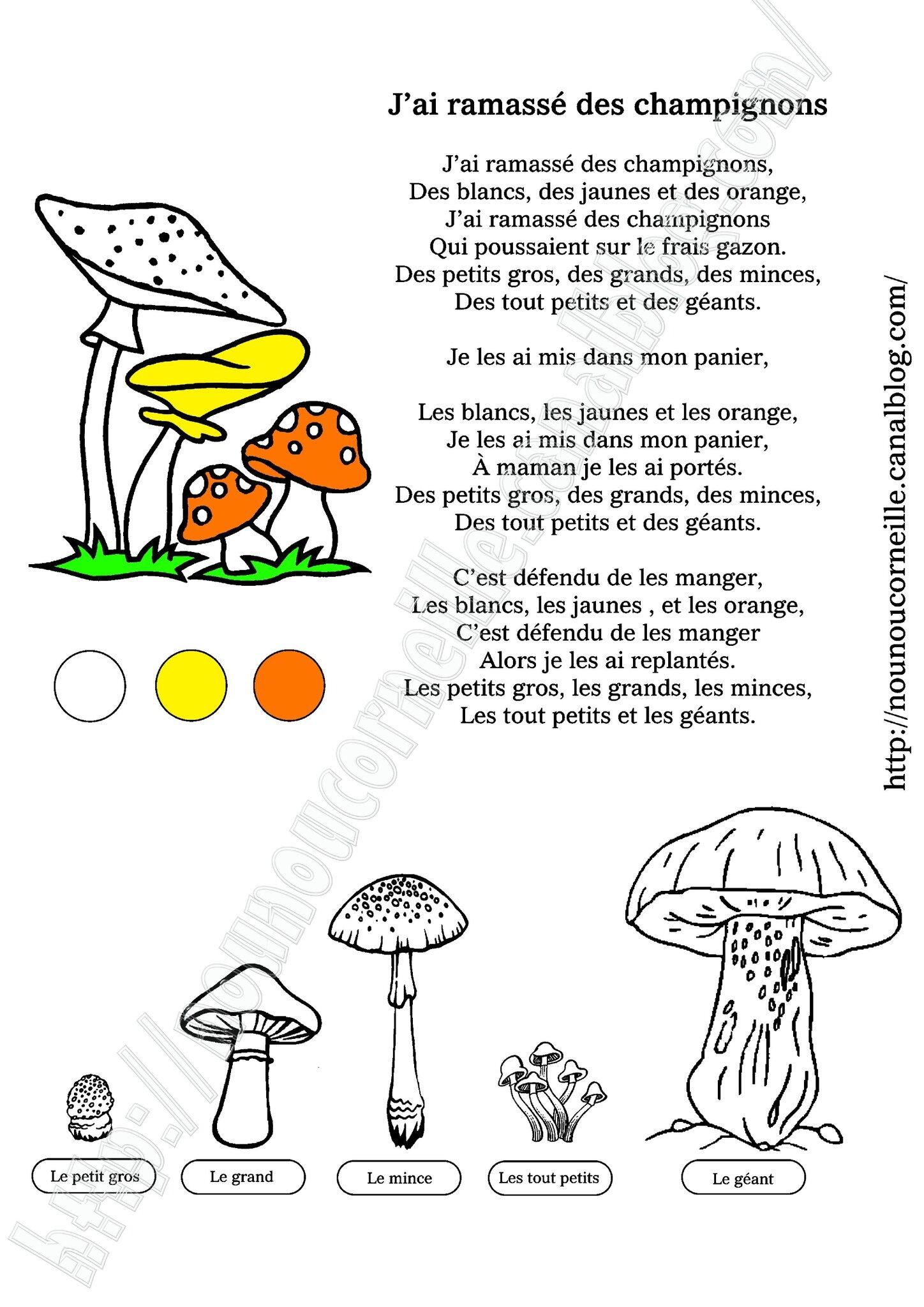 J'ai ramassé des champignons couleurs fili