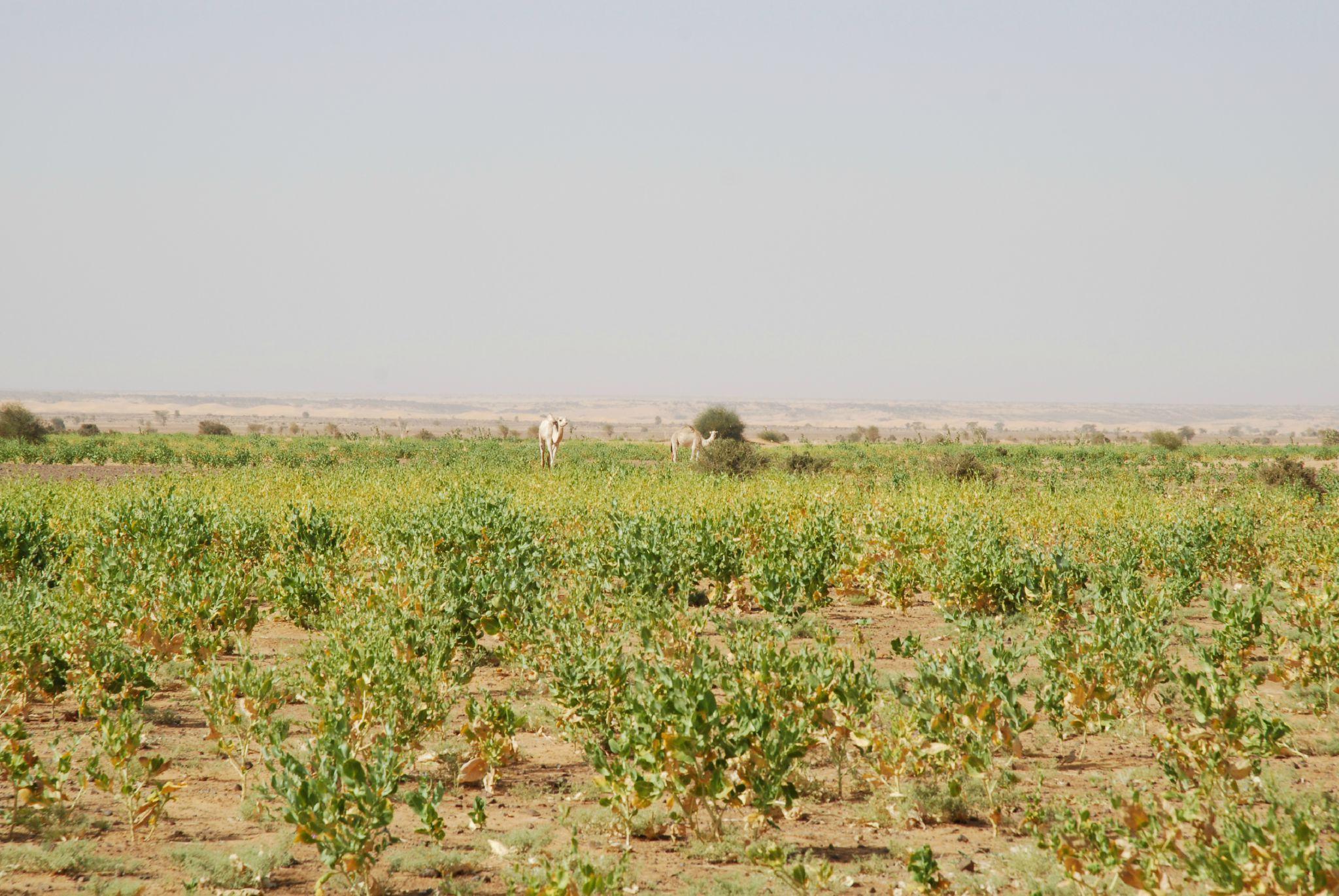 mauritanie et mali 2009 069