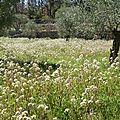 Mon petit jardin dans la prairie... 2