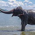Sri lanka : le royaume des éléphants