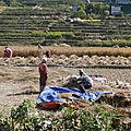 SOLEN-Solidarité Enfance Népal