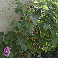 _DSC0059