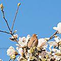 pinson-magnolia14-01