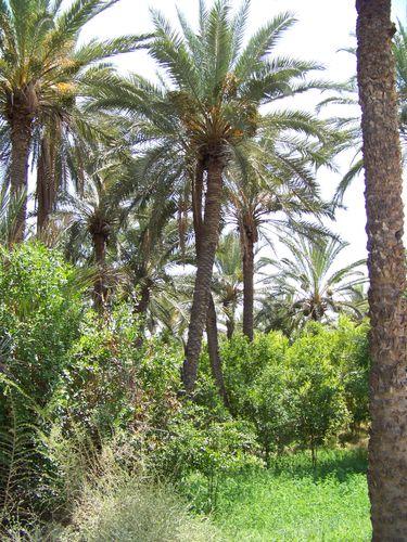 petite oasis de Nefta