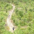Forêt domaniale de St hilaire de riez