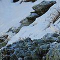 lagopéde alpin 33