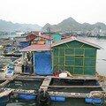 village flottant de Cat Ba