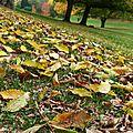 Des feuilles mortes en novembre