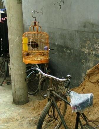 Vélo et oiseau dans un hutong