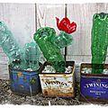 Collection de cactus