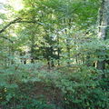 Rando Cerisy la forêt