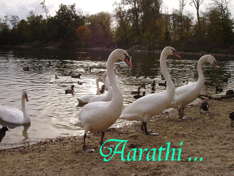 L'étang du Cora, ACHERES.