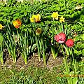 Drôle de printemps