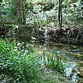 Végétation méditerranéenne Ripisylve forêt humide Berge Rivière Jouques en Provence