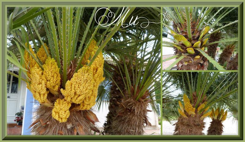 palmiers 23 04 2018