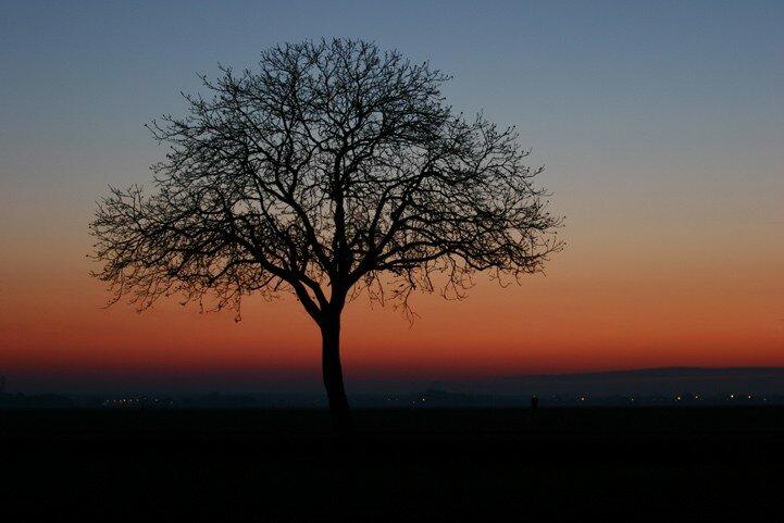 arbre10